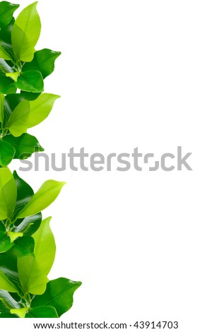 Green young plant border on white background - stock photo