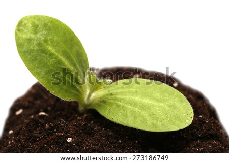 Green young plant isolated on white background. macro. - stock photo
