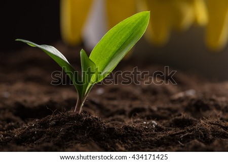 Green young sprout growing in fertile soil with watering can and rubber gloves on background - stock photo
