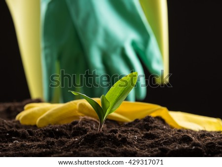Green young sprout growing in fertile soil with waterpot and rubber gloves on background - stock photo