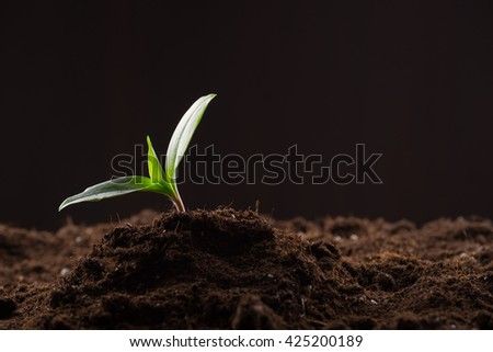 Green young sprout growing in good brown soil. New life concept