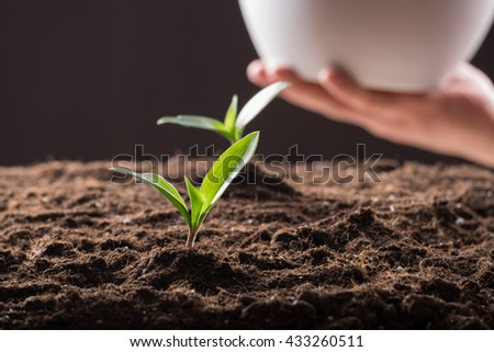 Green young sprouts growing in good brown soil and white flowerpot in man hand. New life concept - stock photo