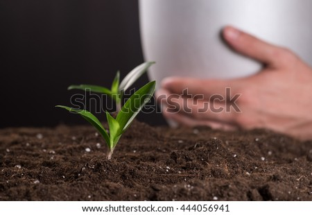 Green young sprouts growing in good brown soil and white flowerpot in man hand on background. New life concept - stock photo