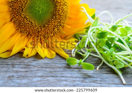 green young sunflower sprouts on wooden table - stock photo