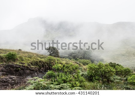 Greeneries on Hills - stock photo