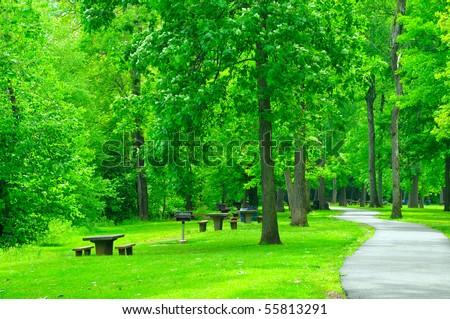 greenery in the park