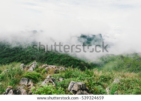 greenery space of environment in the top of hill with mist  that feel fresh and recreation