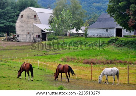 Greenfield, Massachusertts - September 19, 2014:  Three horses grazing in a pasture on a Berkshires farm   - stock photo