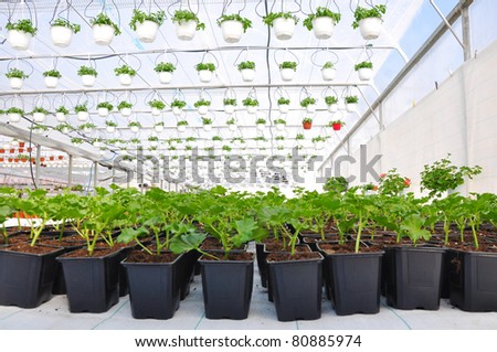 Greenhouse flowers in plastic pots. Botany and gardening flowers.