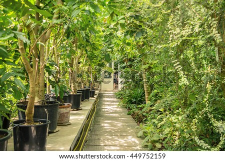 Greenhouse inside with green plants. Many green plants in pots. Perspective picture. Walking way in the center of hothouse with foliage on left and right sides and white door on the end. Sunny day.  - stock photo