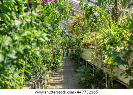 Greenhouse inside with green plants. Many green plants of the borders. Perspective picture. Walking way in the center of hothouse with foliage on left and right sides. Sunny day. Blooming flowers. - stock photo