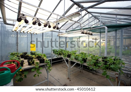 Greenhouse Series   Inside A Greenhouse   Young Plants Growing In The  Warmth Of Heat Lamps