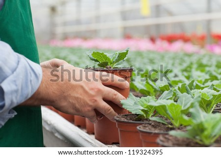 Greenhouse worker handling potted seedlings - stock photo
