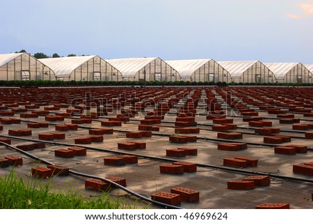 Greenhouses with rows and rows of supporting bricks and irrigation tubing: ready for the plants - stock photo
