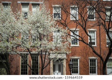 Greenwich Village apartment with cherry trees blooming in front, New York City - stock photo