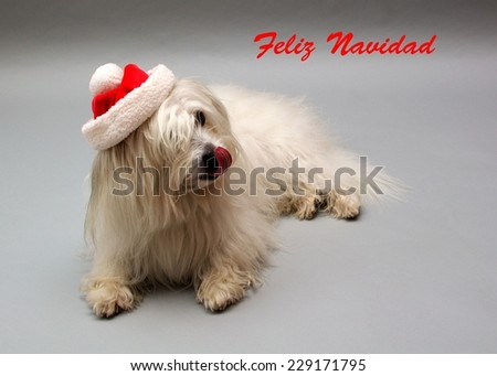 Greeting card (Merry Christmas) in Spanish