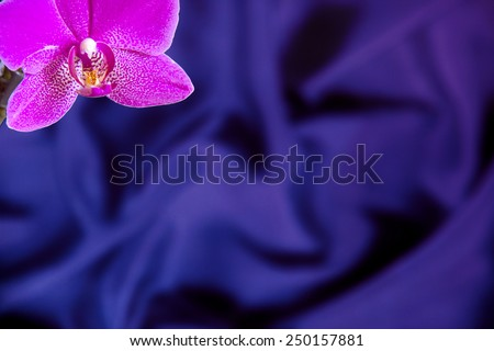 Greeting Card Template with Orchid Flower on Royal Blue Silk background  - stock photo