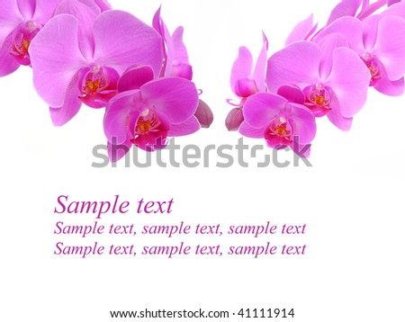 greeting card with orchid