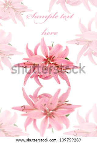 greeting card with pink lily for your design