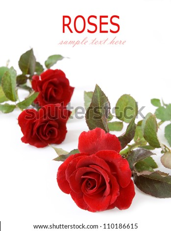 Greeting cart with red  velvet roses isolated on white background with sample text - stock photo
