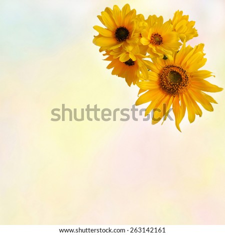 Greeting floral card with stylized  bouquet of sunflowers on colorful watercolor background - stock photo