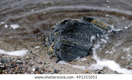grey and blue stones and shells with sea grass at a northern beach