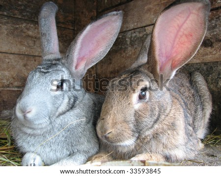 grey and brown rabbits sitting in the hutch - stock photo