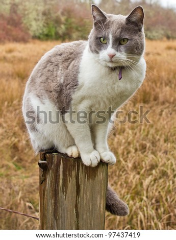Grey and white cat sitting on farm fence post - stock photo