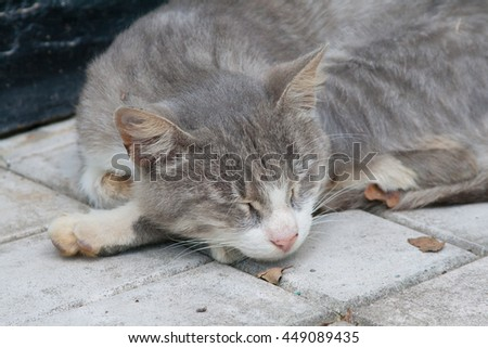 Grey and white domestic cat sleeping