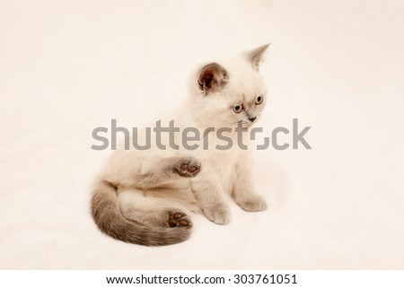 Grey and white kitten on pink background
