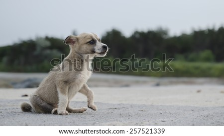 Grey and white pariah little dog with black eyes
