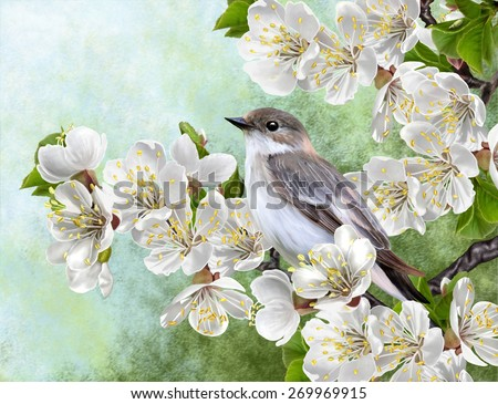 Grey bird on a branch of a blossoming apricot - stock photo