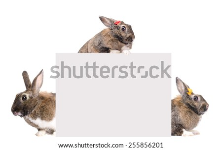 grey bunny, photographed in the studio, isolated on white background, with blank for text - stock photo