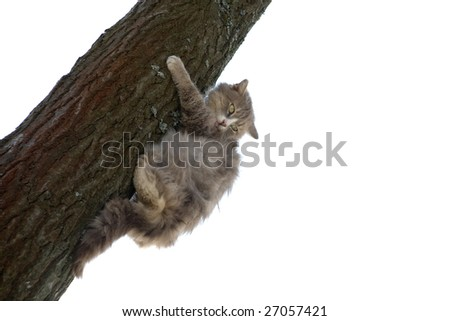 Grey cat climbing a tree - stock photo