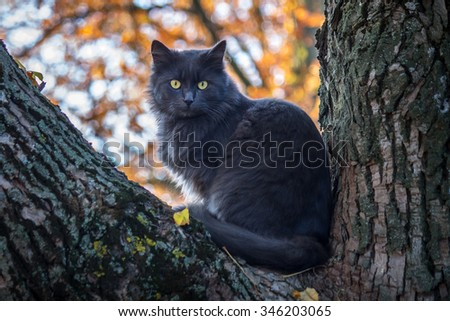 Grey cat fluffy sits on the tree. - stock photo