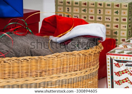 Grey Cat in Basket at Christmas Time with the Presents - stock photo