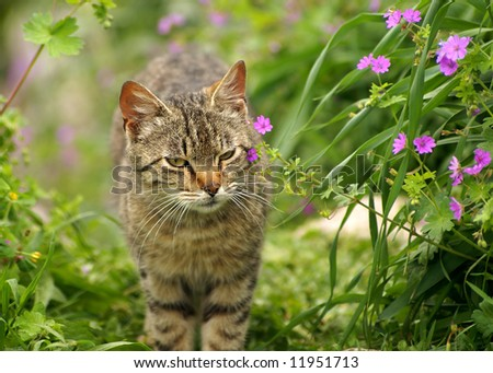 grey cat in spring flowering natural background - stock photo