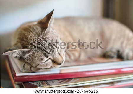 Grey cat lying  - stock photo