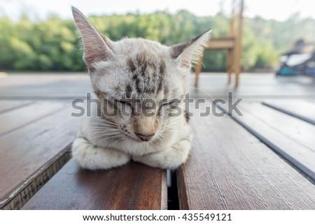 Grey cat lying on wooden floor - stock photo
