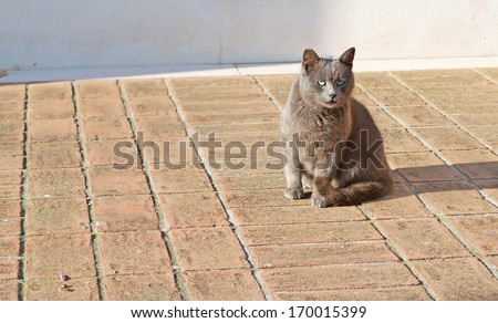 grey cat on a beige floor - stock photo