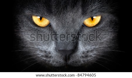 grey cat on a black background - stock photo