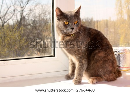grey cat on the window sill - stock photo
