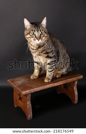 Grey cat on wooden stool on dark background - stock photo