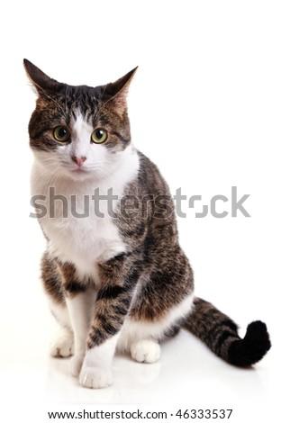 Grey cat sit on white - stock photo