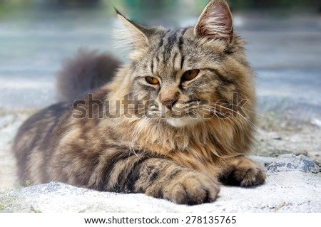 Grey cat takes a rest with tired face - stock photo