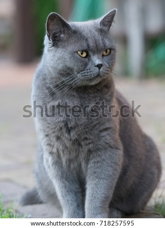 Grey cat who is sitting in detail