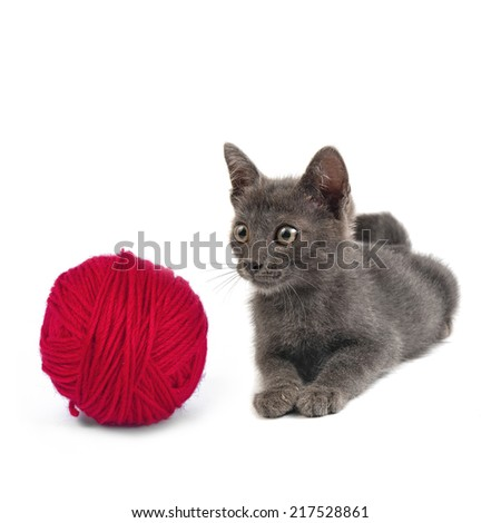 Grey cat with ball of red yarn on white background - stock photo