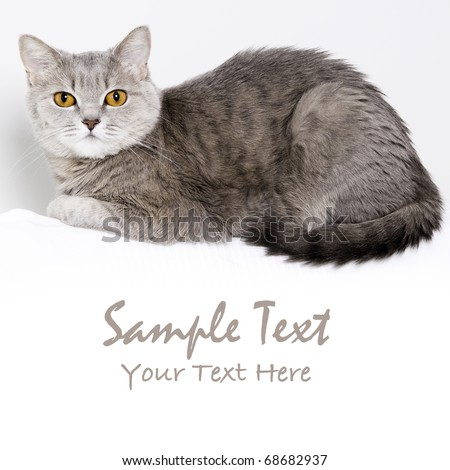 Grey cat with big wide open orange eyes - stock photo