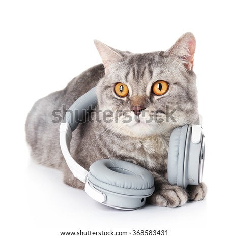 Grey cat with headphones isolated on white background