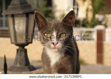 Grey cat with yellow green eyes near street lamp. Cat with smart look.
